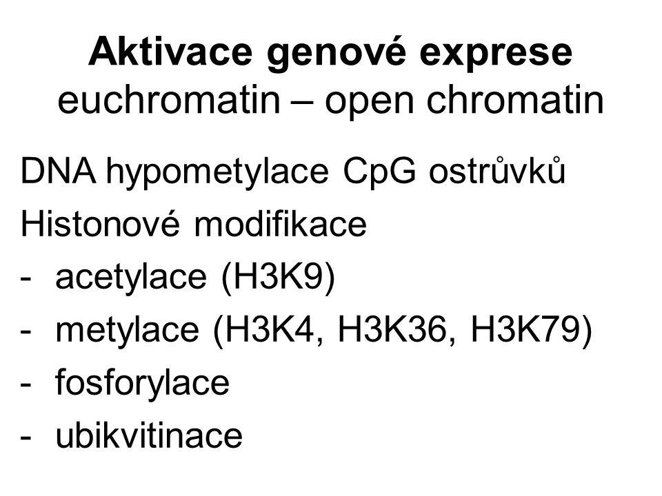Aktivace genové exprese euchromatin – open chromatin DNA hypometylace CpG ostrůvků Histonové modifikace - acetylace (H3K9) - metylace (H3K4, H3K36, H3