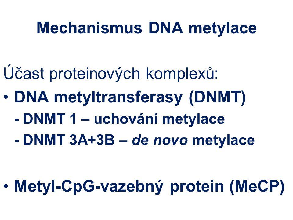 Mechanismus DNA metylace Účast proteinových komplexů: DNA metyltransferasy (DNMT) - DNMT 1 – uchování metylace - DNMT 3A+3B – de novo metylace Metyl-C