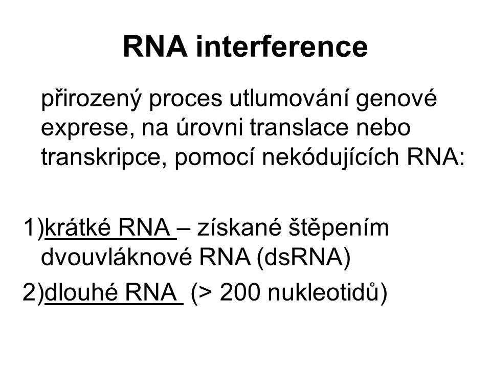 RNA interference přirozený proces utlumování genové exprese, na úrovni translace nebo transkripce, pomocí nekódujících RNA: 1)krátké RNA – získané ště