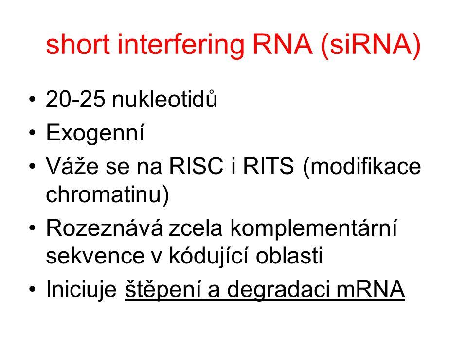 short interfering RNA (siRNA) 20-25 nukleotidů Exogenní Váže se na RISC i RITS (modifikace chromatinu) Rozeznává zcela komplementární sekvence v kóduj