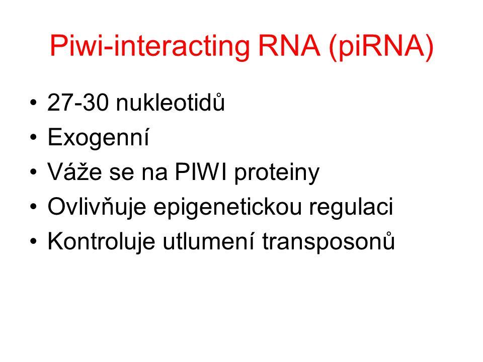 Piwi-interacting RNA (piRNA) 27-30 nukleotidů Exogenní Váže se na PIWI proteiny Ovlivňuje epigenetickou regulaci Kontroluje utlumení transposonů