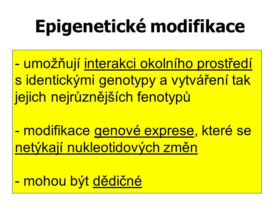 Epigenetické modifikace - umožňují interakci okolního prostředí s identickými genotypy a vytváření tak jejich nejrůznějších fenotypů - modifikace geno