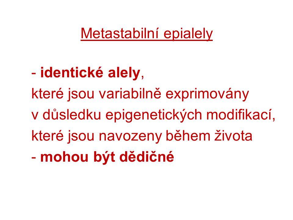 Metastabilní epialely - identické alely, které jsou variabilně exprimovány v důsledku epigenetických modifikací, které jsou navozeny během života - mo