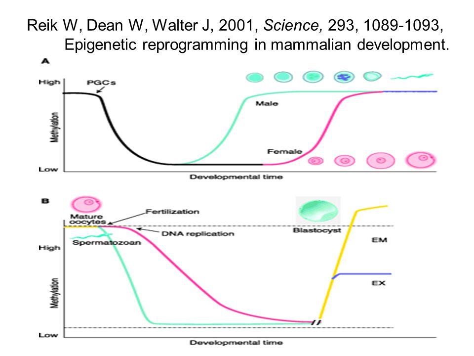 Epigenetické modifikace u monozygotních dvojčat Fraga et al., 2005, PNAS, 102, 10604-10609 u 65% párů identické u 35% párů rozdílné korelace s věkem a s dobou strávenou společně