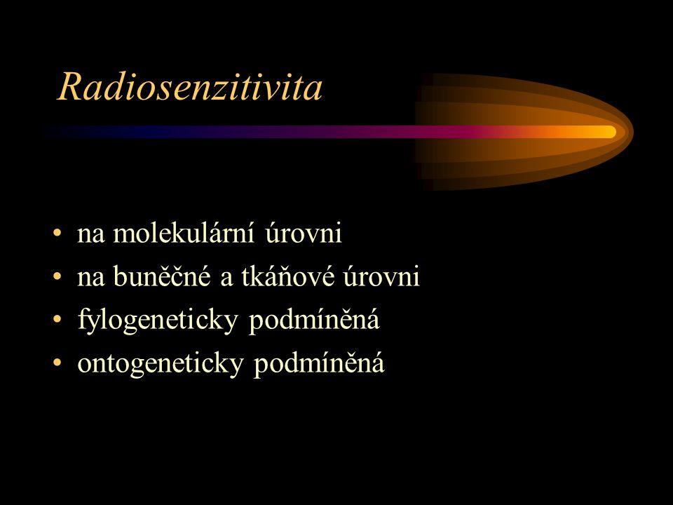 Radiosenzitivita na molekulární úrovni na buněčné a tkáňové úrovni fylogeneticky podmíněná ontogeneticky podmíněná