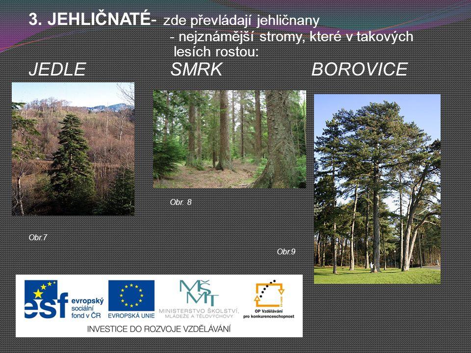 3. JEHLIČNATÉ- zde převládají jehličnany - nejznámější stromy, které v takových lesích rostou: JEDLESMRKBOROVICE Obr. 8 Obr.7 Obr.9