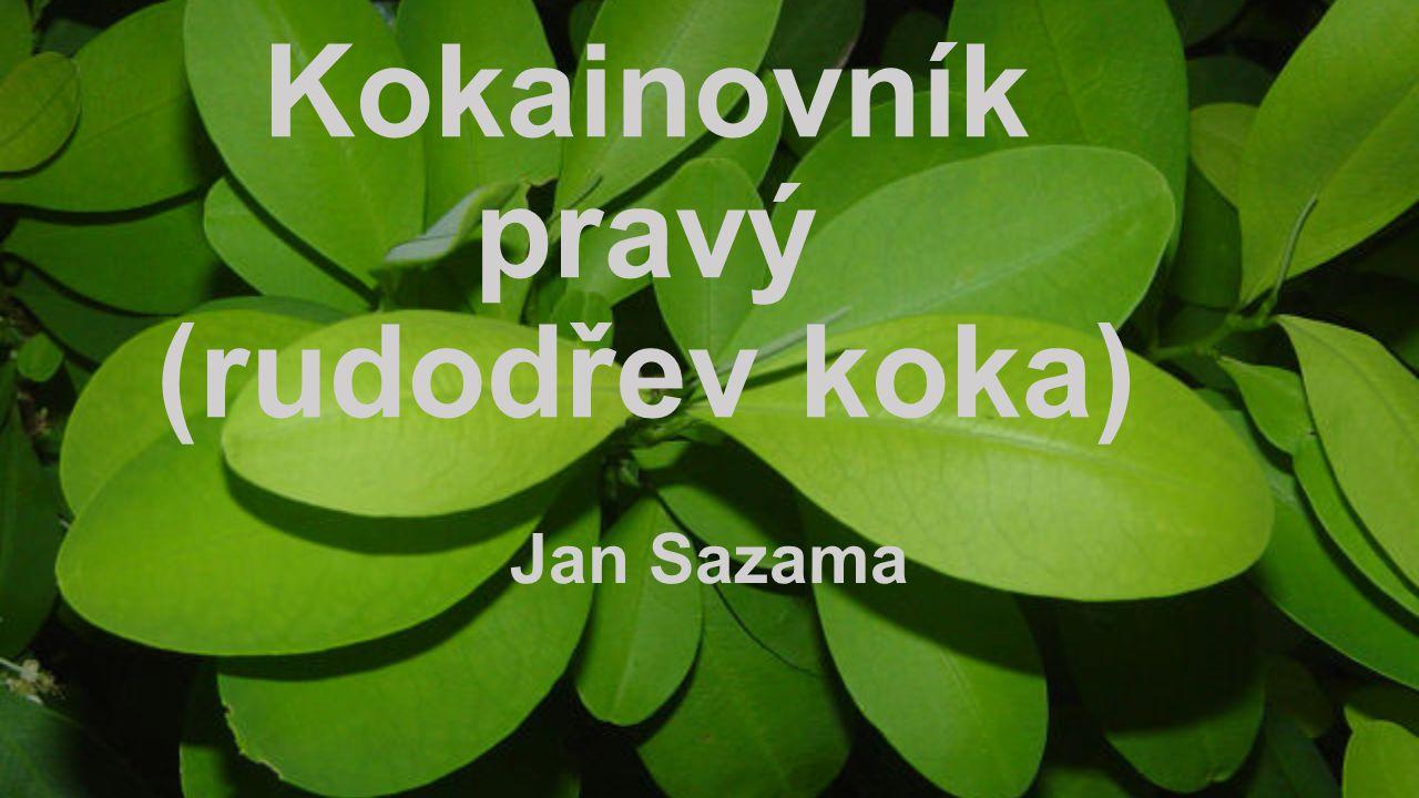 Jan Sazama
