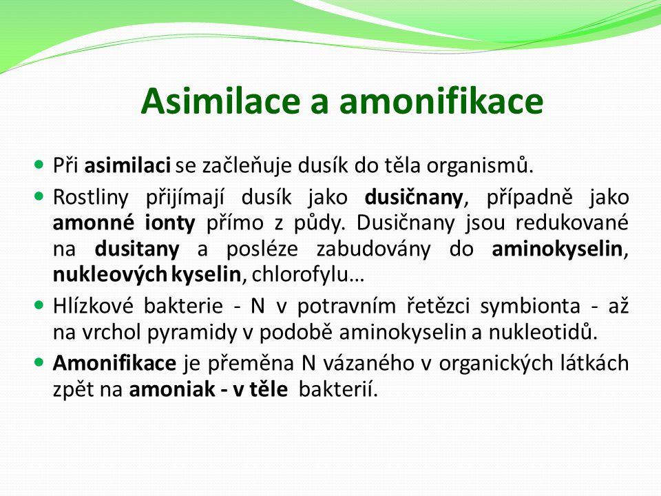 Asimilace a amonifikace Při asimilaci se začleňuje dusík do těla organismů. Rostliny přijímají dusík jako dusičnany, případně jako amonné ionty přímo