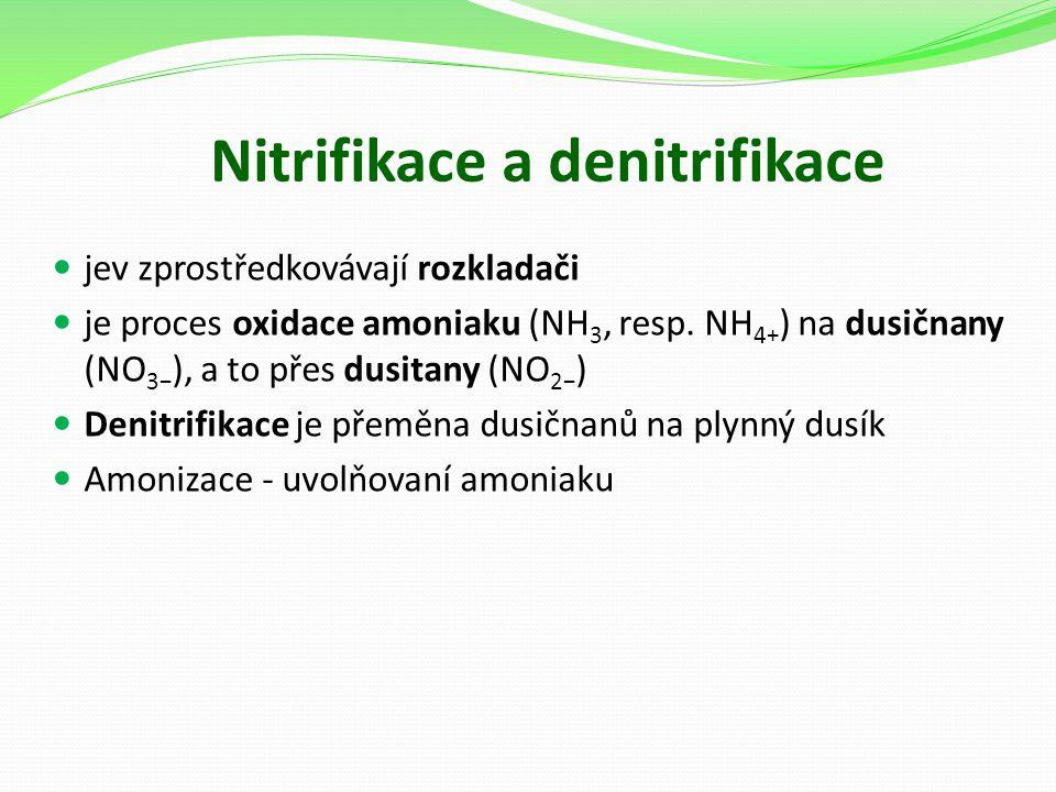 Nitrifikace a denitrifikace jev zprostředkovávají rozkladači je proces oxidace amoniaku (NH 3, resp. NH 4+ ) na dusičnany (NO 3− ), a to přes dusitany