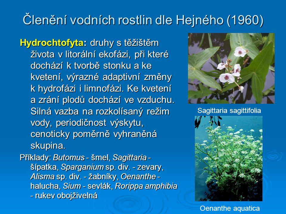 Členění vodních rostlin dle Hejného (1960) Hydrochtofyta: druhy s těžištěm života v litorální ekofázi, při které dochází k tvorbě stonku a ke kvetení, výrazné adaptivní změny k hydrofázi i limnofázi.