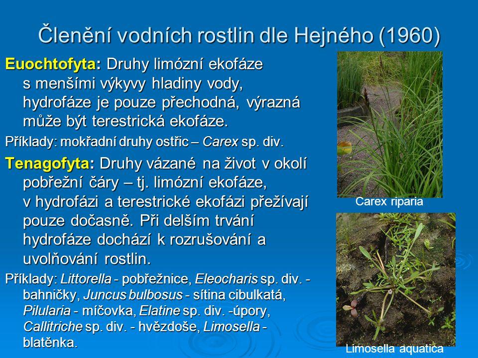 Členění vodních rostlin dle Hejného (1960) Euochtofyta: Druhy limózní ekofáze s menšími výkyvy hladiny vody, hydrofáze je pouze přechodná, výrazná může být terestrická ekofáze.
