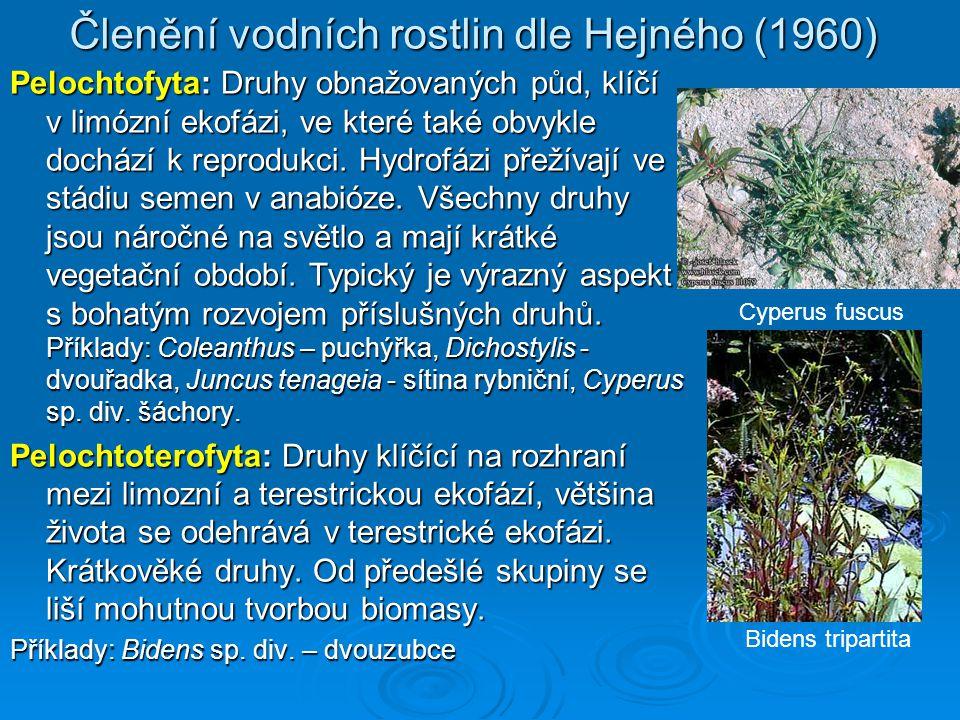 Členění vodních rostlin dle Hejného (1960) Pelochtofyta: Druhy obnažovaných půd, klíčí v limózní ekofázi, ve které také obvykle dochází k reprodukci.