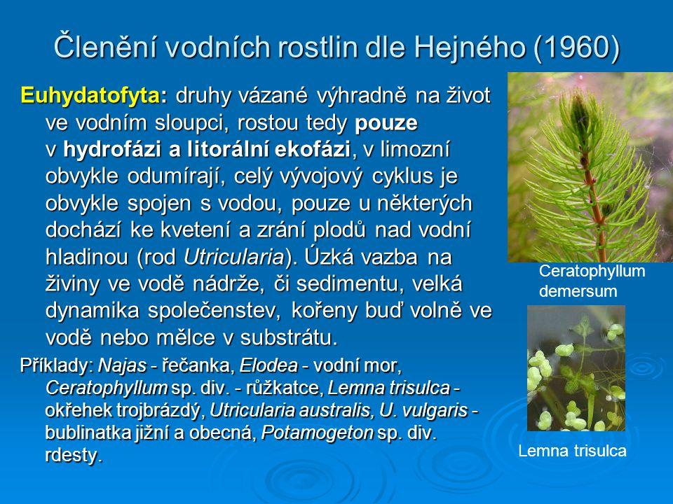 Členění vodních rostlin dle Hejného (1960) Euhydatofyta: druhy vázané výhradně na život ve vodním sloupci, rostou tedy pouze v hydrofázi a litorální ekofázi, v limozní obvykle odumírají, celý vývojový cyklus je obvykle spojen s vodou, pouze u některých dochází ke kvetení a zrání plodů nad vodní hladinou (rod Utricularia).