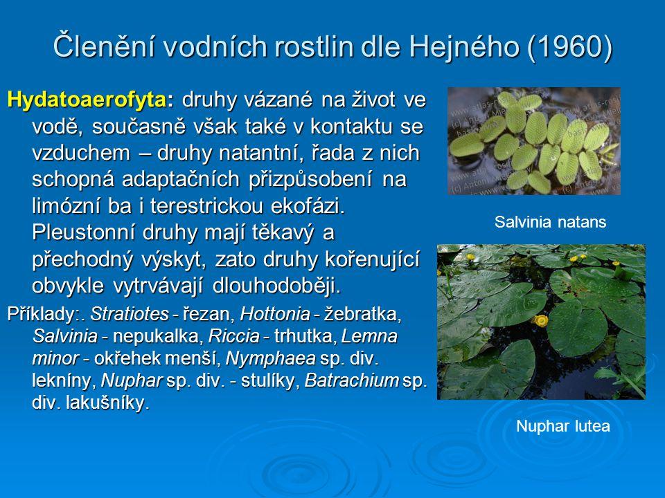 Členění vodních rostlin dle Hejného (1960) Hydatoaerofyta: druhy vázané na život ve vodě, současně však také v kontaktu se vzduchem – druhy natantní, řada z nich schopná adaptačních přizpůsobení na limózní ba i terestrickou ekofázi.