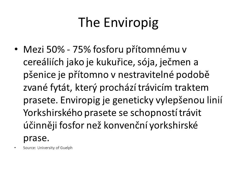The Enviropig Mezi 50% - 75% fosforu přítomnému v cereáliích jako je kukuřice, sója, ječmen a pšenice je přítomno v nestravitelné podobě zvané fytát,
