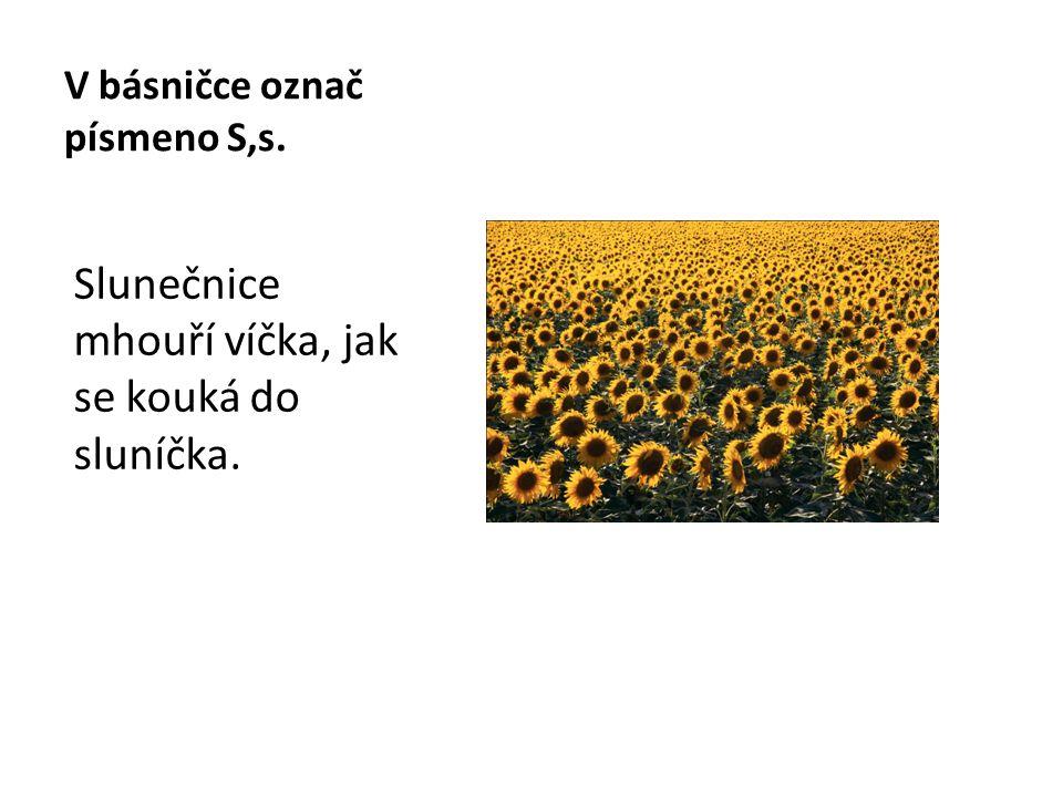 V básničce označ písmeno S,s. Slunečnice mhouří víčka, jak se kouká do sluníčka.