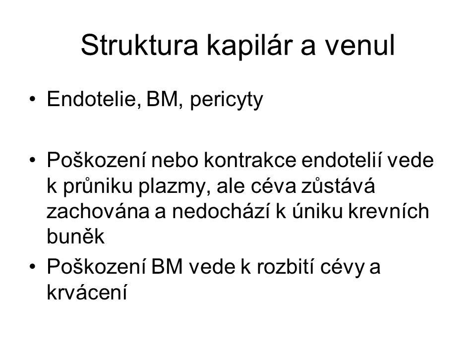 Struktura kapilár a venul Endotelie, BM, pericyty Poškození nebo kontrakce endotelií vede k průniku plazmy, ale céva zůstává zachována a nedochází k ú