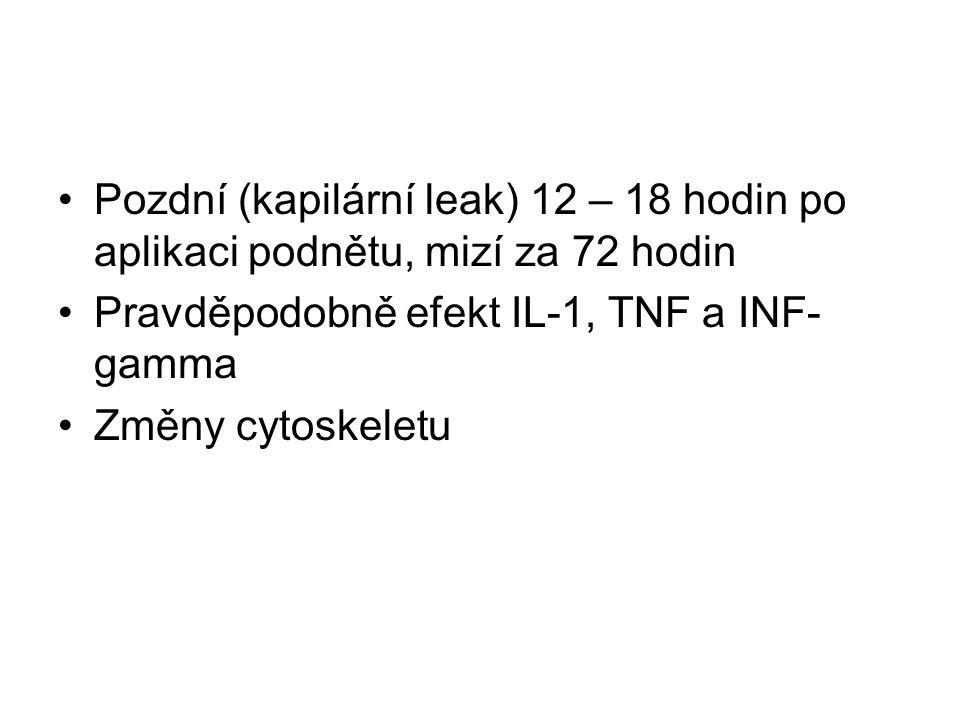 Pozdní (kapilární leak) 12 – 18 hodin po aplikaci podnětu, mizí za 72 hodin Pravděpodobně efekt IL-1, TNF a INF- gamma Změny cytoskeletu