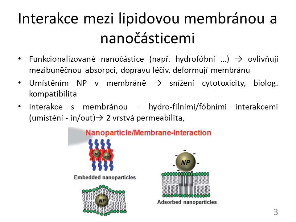 Interakce mezi lipidovou membránou a nanočásticemi Funkcionalizované nanočástice (např. hydrofóbní …) → ovlivňují mezibuněčnou absorpci, dopravu léčiv