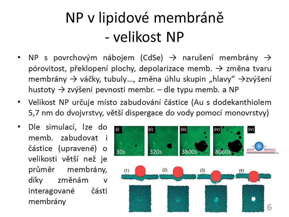 NP v lipidové membráně - velikost NP NP s povrchovým nábojem (CdSe) → narušení membrány → pórovitost, překlopení plochy, depolarizace memb. → změna tv