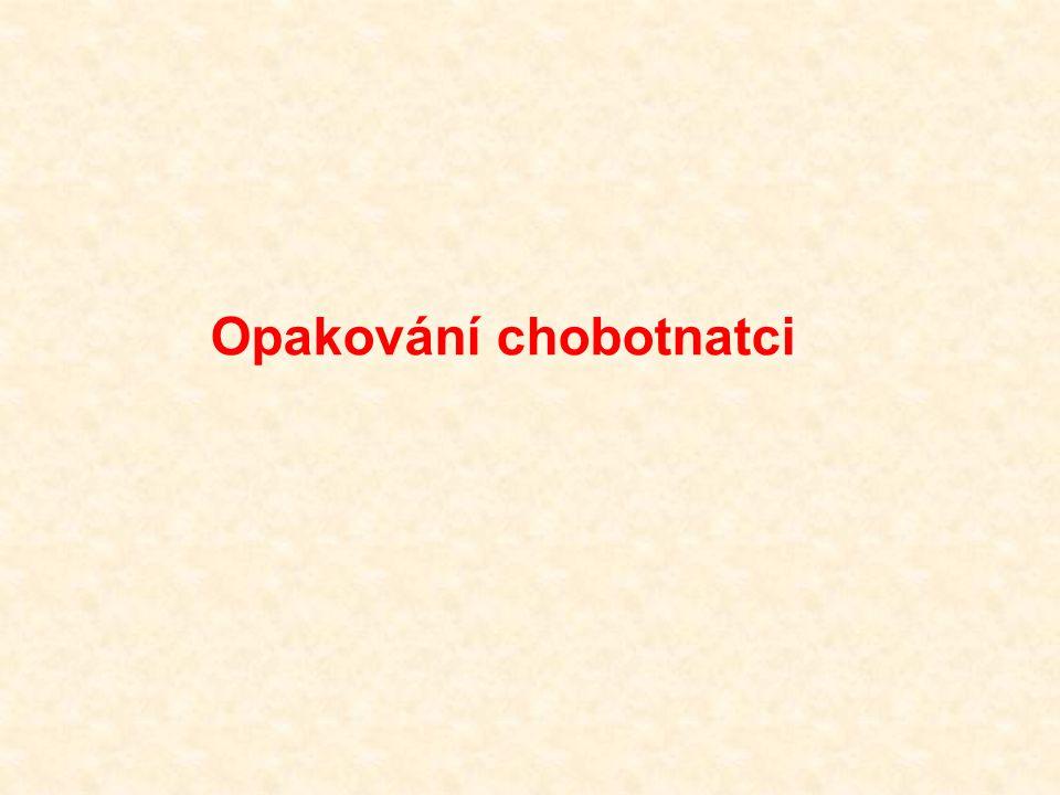 Opakování chobotnatci