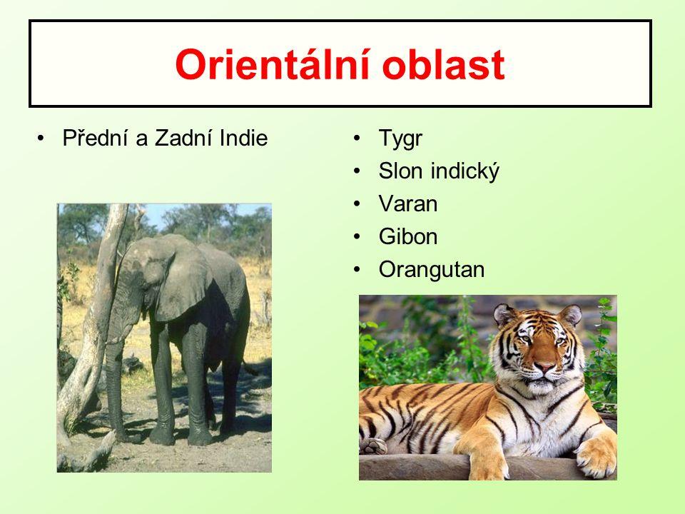 Orientální oblast Přední a Zadní IndieTygr Slon indický Varan Gibon Orangutan