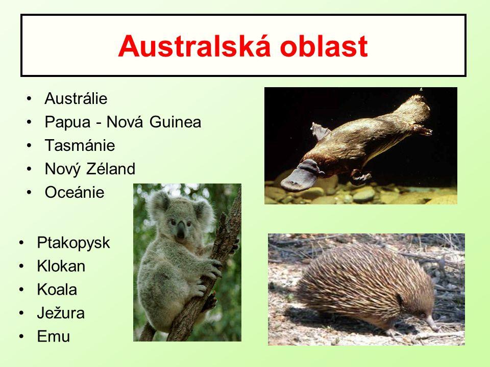 Australská oblast Austrálie Papua - Nová Guinea Tasmánie Nový Zéland Oceánie Ptakopysk Klokan Koala Ježura Emu