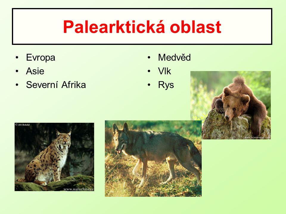 Palearktická oblast Evropa Asie Severní Afrika Medvěd Vlk Rys