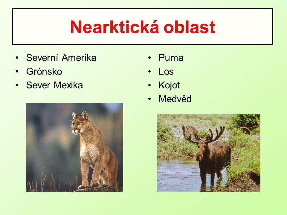 Neotropická oblast Jižní a Střední Amerika Malé a Velké Antily Mravenečník Lenochod Lama Jaguár Anakonda