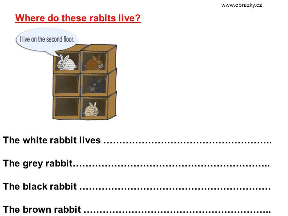 Where do these rabits live. The white rabbit lives ……………………………………………..