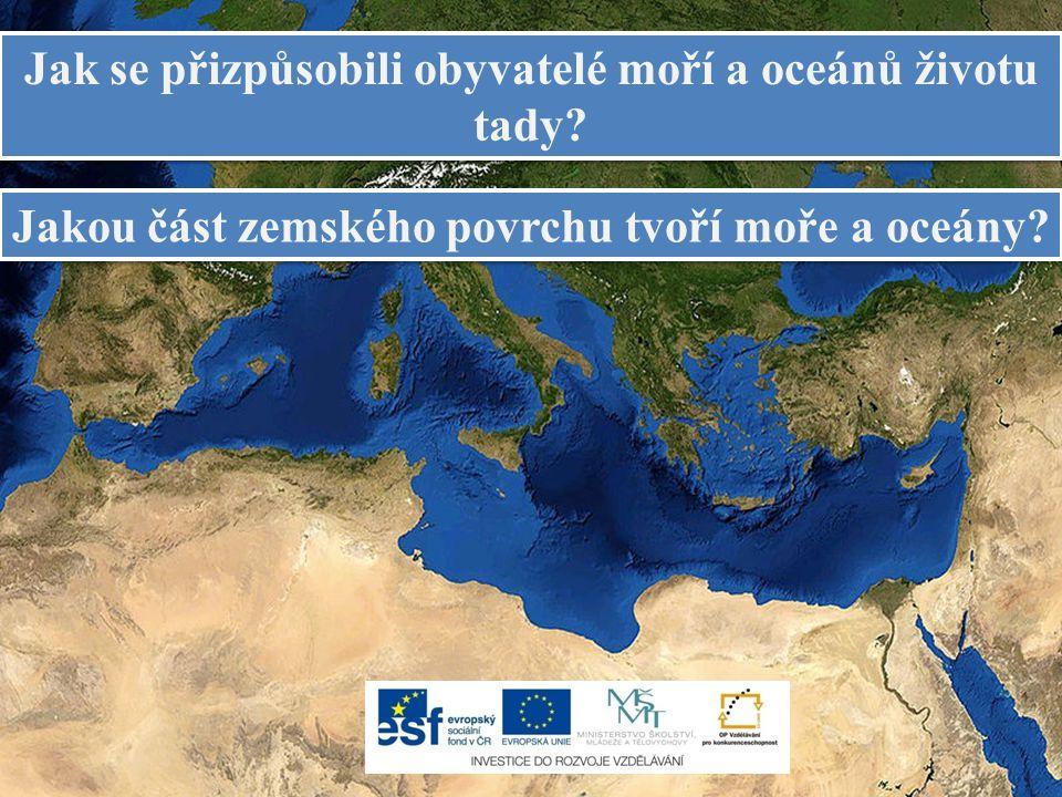 Jak se přizpůsobili obyvatelé moří a oceánů životu tady.