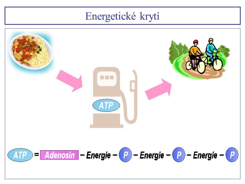 1) Rychlostní zatížení s dobou trvání výkonu přibližně 15 s využívá jako hlavní energetický zdroj systém makroergních (na energii bohatých) fosfátů ATP a CP (ATP – CP systém) s nepatrnou tvorbou laktátu 2) Rychlostně vytrvalostní zatížení od 15 – 50 s využívá ATP a CP, navíc anaerobní glykolýzu s tvorbou laktátu.
