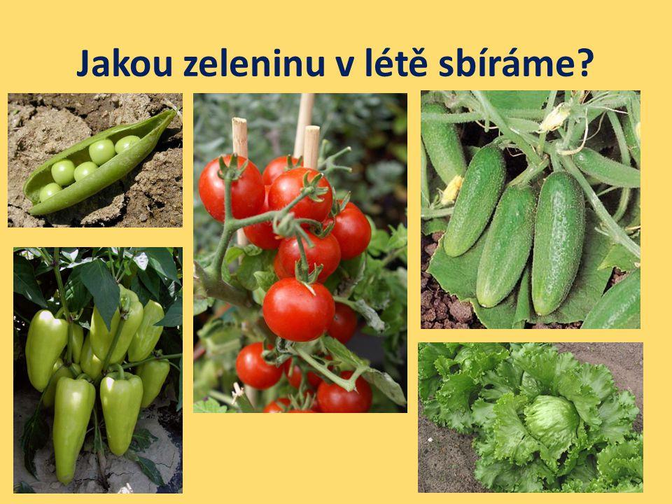 Jakou zeleninu v létě sbíráme?