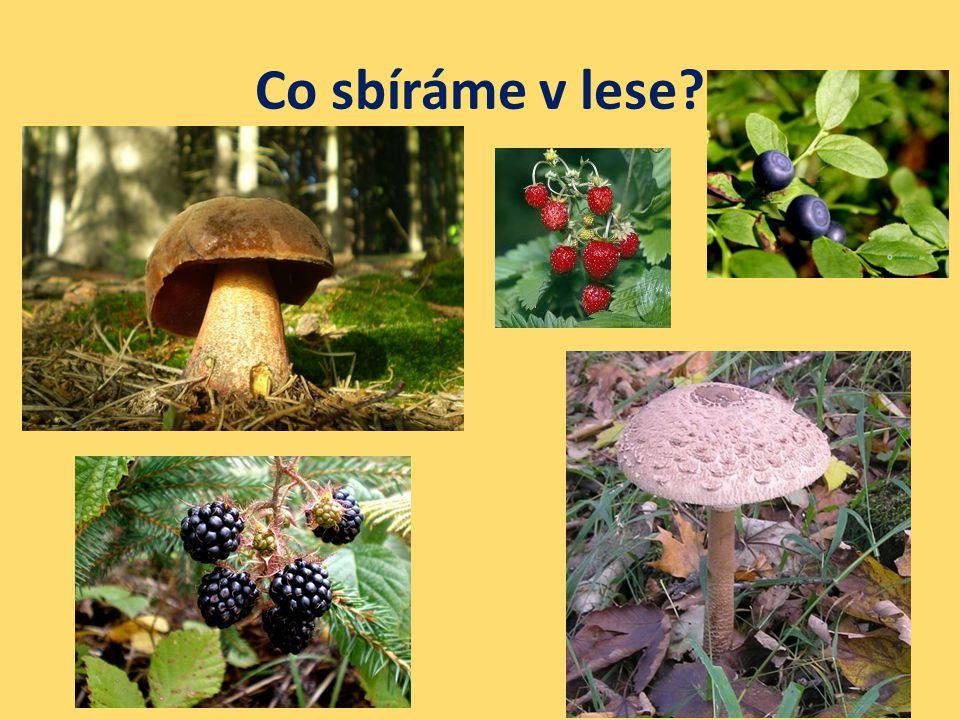 Co sbíráme v lese?