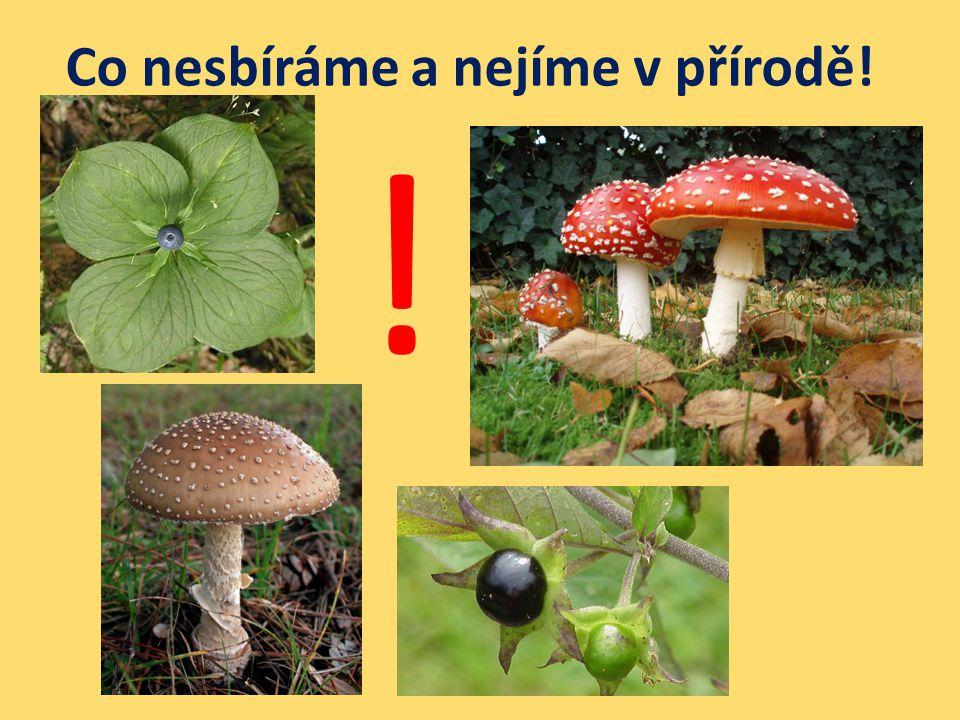 Co nesbíráme a nejíme v přírodě! !