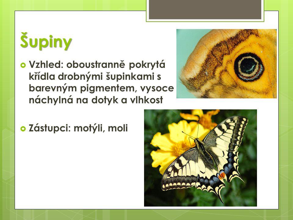 Šupiny  Vzhled: oboustranně pokrytá křídla drobnými šupinkami s barevným pigmentem, vysoce náchylná na dotyk a vlhkost  Zástupci: motýli, moli