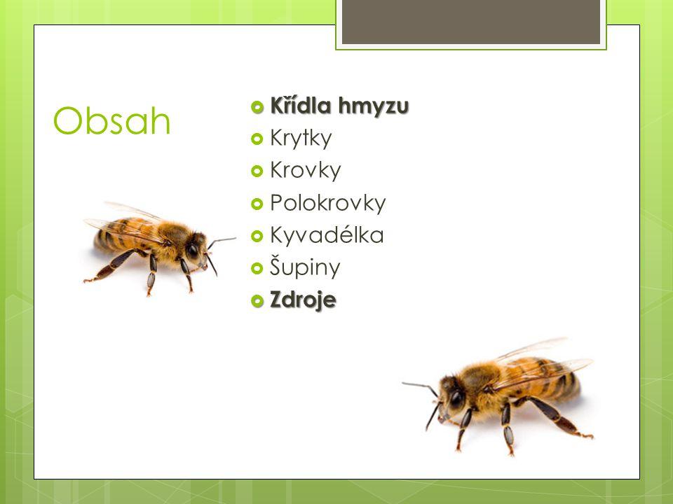 Obsah  Křídla hmyzu  Krytky  Krovky  Polokrovky  Kyvadélka  Šupiny  Zdroje