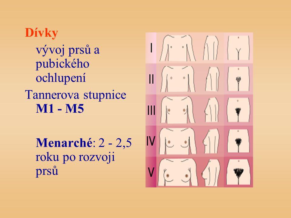 Dívky vývoj prsů a pubického ochlupení Tannerova stupnice M1 - M5 Menarché: 2 - 2,5 roku po rozvoji prsů