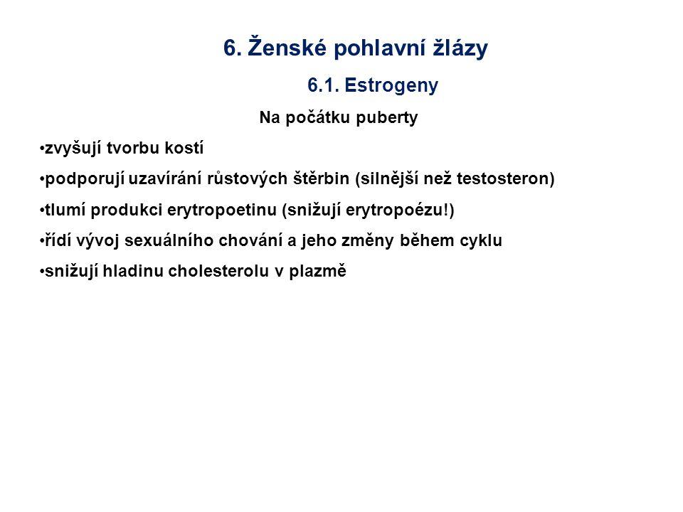 6. Ženské pohlavní žlázy 6.1. Estrogeny Na počátku puberty zvyšují tvorbu kostí podporují uzavírání růstových štěrbin (silnější než testosteron) tlumí