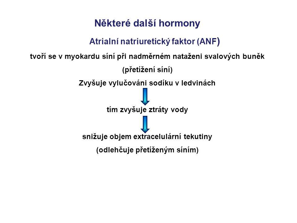 Některé další hormony Atrialní natriuretický faktor (ANF ) tvoří se v myokardu síní při nadměrném nataženi svalových buněk (přetížení síní) Zvyšuje vy