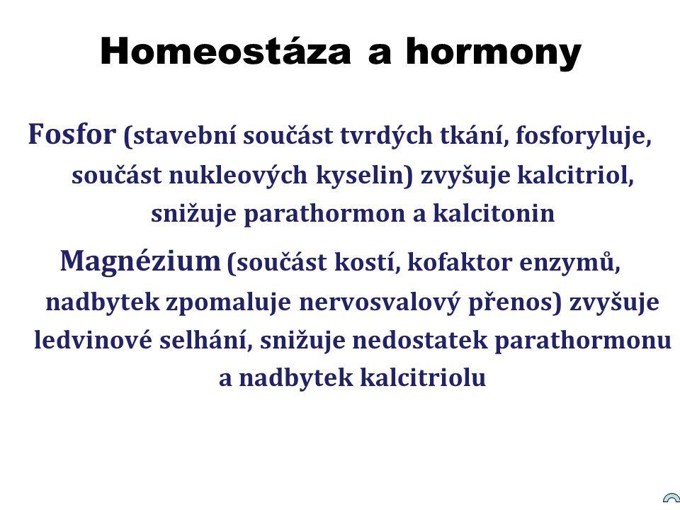 Homeostáza a hormony Fosfor (stavební součást tvrdých tkání, fosforyluje, součást nukleových kyselin) zvyšuje kalcitriol, snižuje parathormon a kalcit