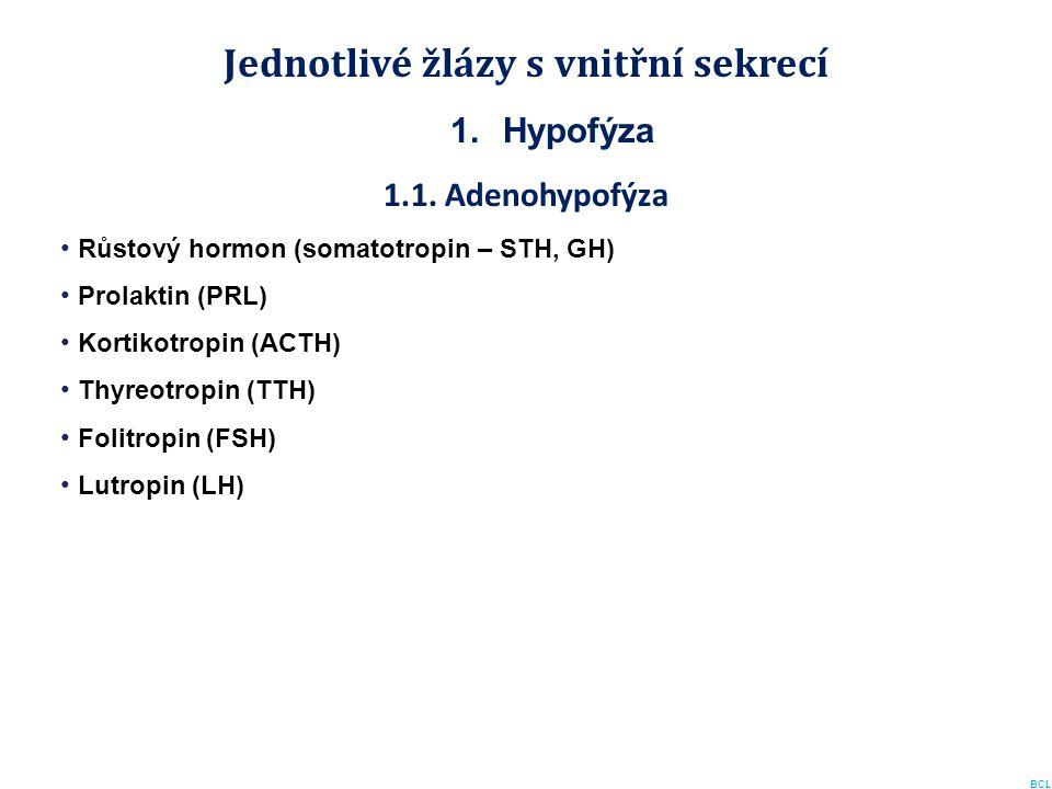 Jednotlivé žlázy s vnitřní sekrecí 1.Hypofýza 1.1. Adenohypofýza Růstový hormon (somatotropin – STH, GH) Prolaktin (PRL) Kortikotropin (ACTH) Thyreotr