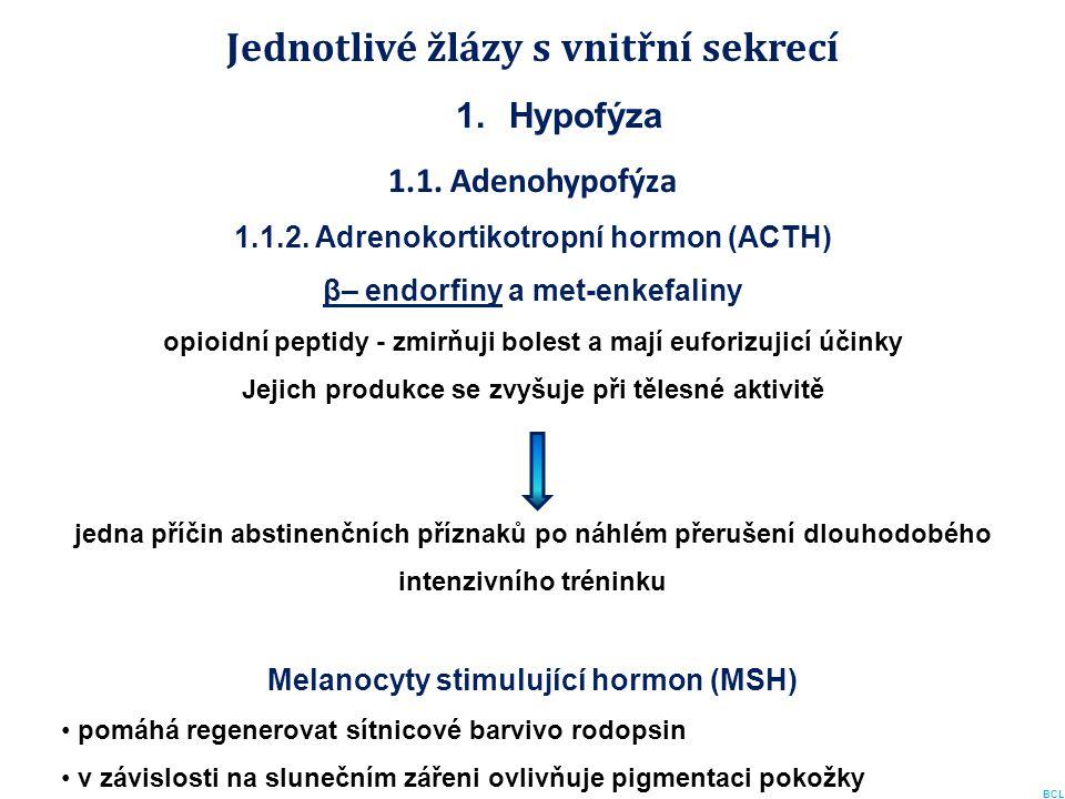 Jednotlivé žlázy s vnitřní sekrecí 1.Hypofýza 1.1. Adenohypofýza 1.1.2. Adrenokortikotropní hormon (ACTH) β– endorfiny a met-enkefaliny opioidní pepti