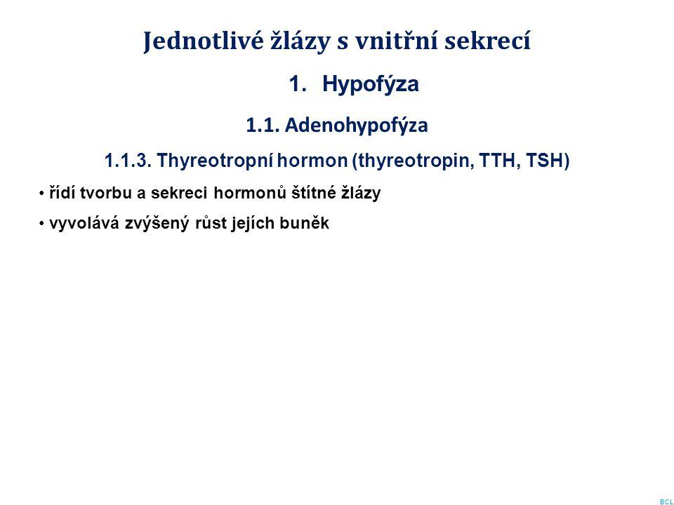 Jednotlivé žlázy s vnitřní sekrecí 1.Hypofýza 1.1. Adenohypofýza 1.1.3. Thyreotropní hormon (thyreotropin, TTH, TSH) řídí tvorbu a sekreci hormonů ští