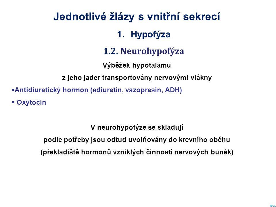 Jednotlivé žlázy s vnitřní sekrecí 1.Hypofýza 1.2. Neurohypofýza Výběžek hypotalamu z jeho jader transportovány nervovými vlákny  Antidiuretický horm