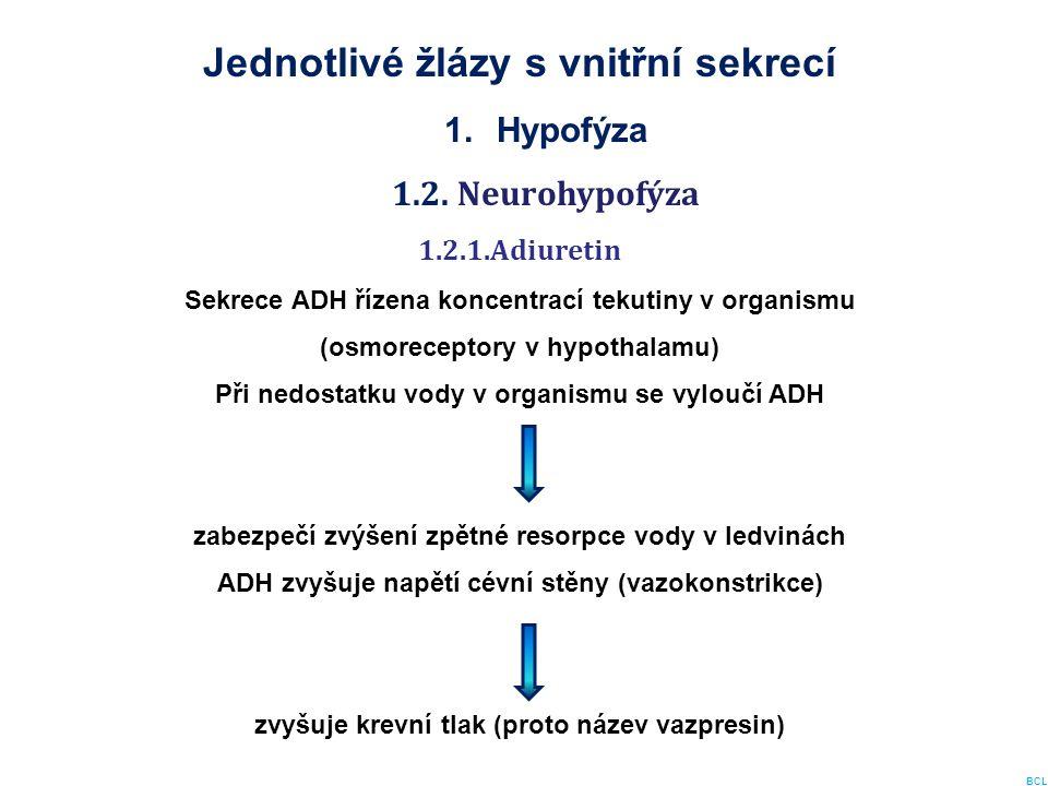 Jednotlivé žlázy s vnitřní sekrecí 1.Hypofýza 1.2. Neurohypofýza 1.2.1.Adiuretin Sekrece ADH řízena koncentrací tekutiny v organismu (osmoreceptory v