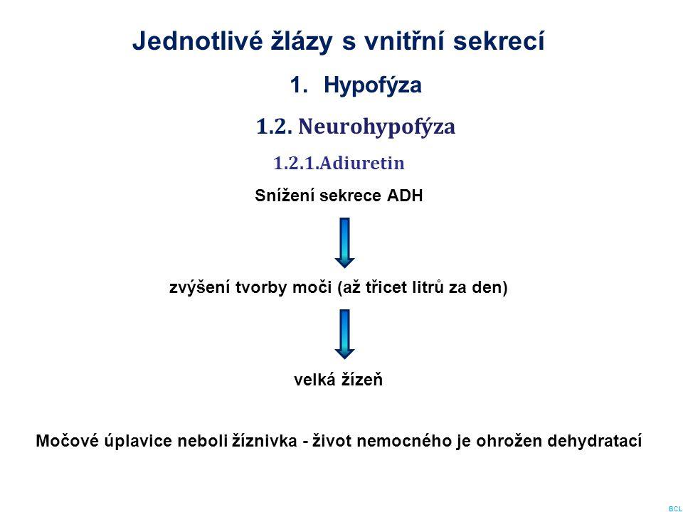Jednotlivé žlázy s vnitřní sekrecí 1.Hypofýza 1.2. Neurohypofýza 1.2.1.Adiuretin Snížení sekrece ADH zvýšení tvorby moči (až třicet litrů za den) velk