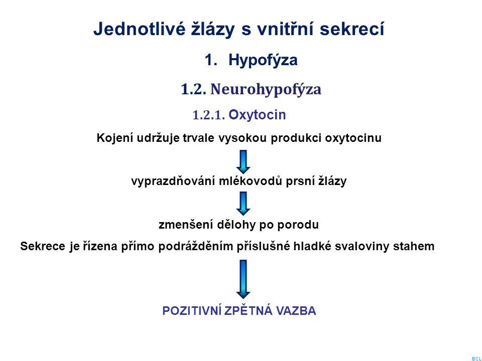 Jednotlivé žlázy s vnitřní sekrecí 1.Hypofýza 1.2. Neurohypofýza 1.2.1. Oxytocin Kojení udržuje trvale vysokou produkci oxytocinu vyprazdňování mlékov