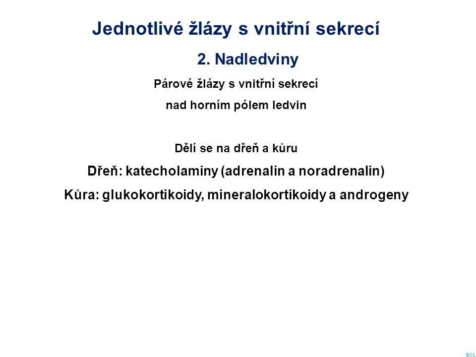 Jednotlivé žlázy s vnitřní sekrecí 2. Nadledviny Párové žlázy s vnitřní sekrecí nad horním pólem ledvin Dělí se na dřeň a kůru Dřeň: katecholaminy (ad