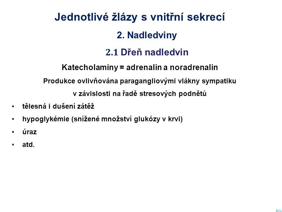 Jednotlivé žlázy s vnitřní sekrecí 2. Nadledviny 2.1 Dřeň nadledvin Katecholaminy = adrenalin a noradrenalin Produkce ovlivňována paragangliovými vlák